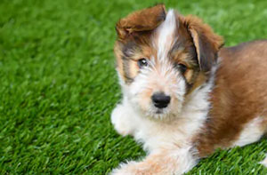 Artificial Grass for Dogs UK
