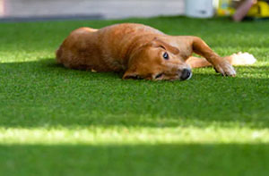 Artificial Grass for Dogs Dursley (GL11)